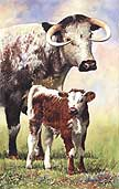 Longhorns:  by Anthony Forster